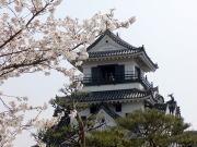 高知城 - 桜と天守