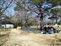 桜の開花情報 - 3月31日
