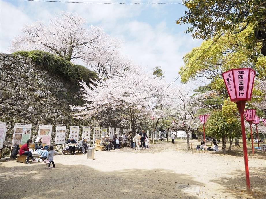 桜 三ノ丸
