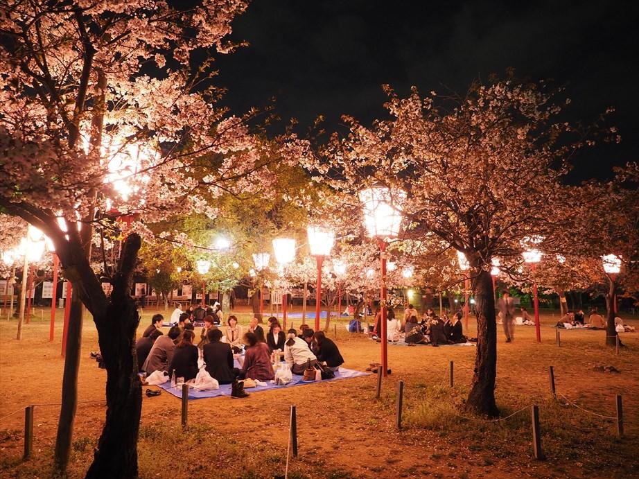 夜桜 三ノ丸