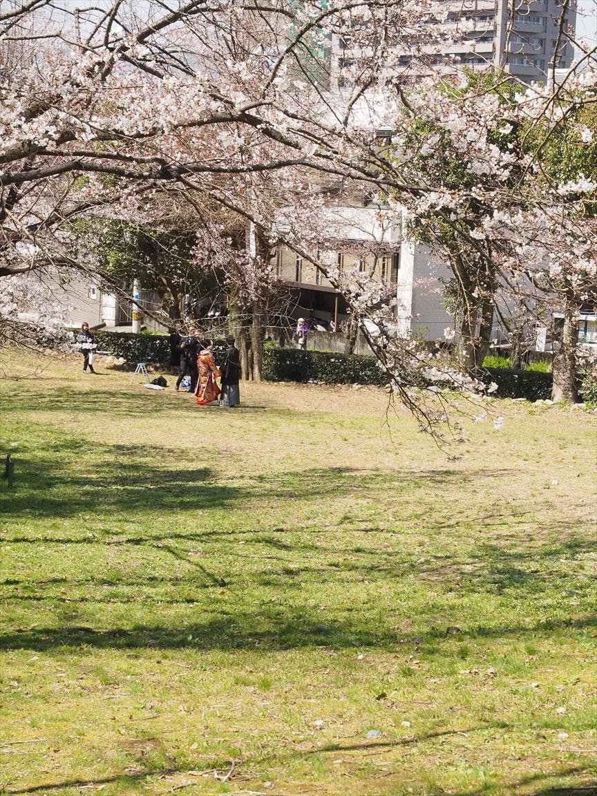 辷山 山桜