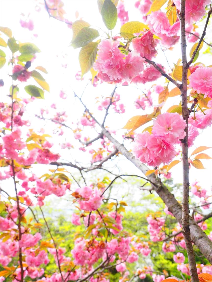 桜 二ノ丸