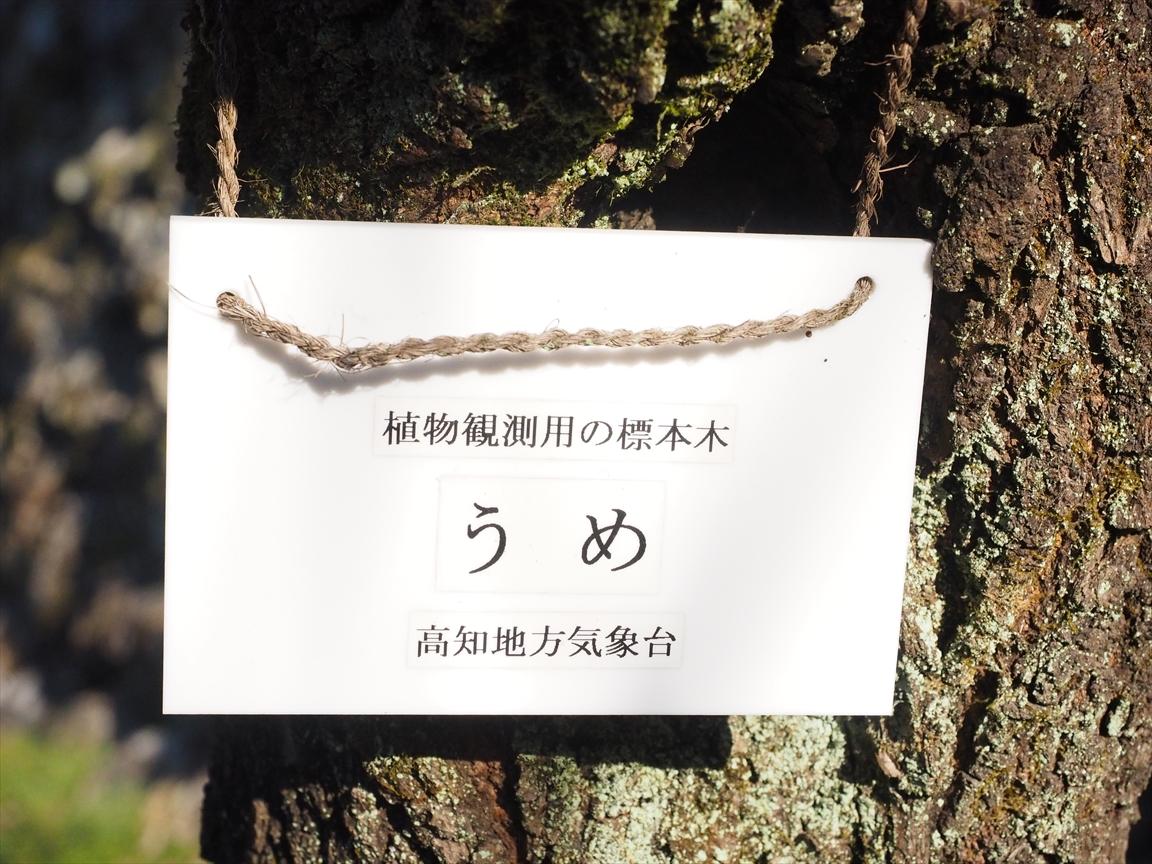 標本木 梅ノ段