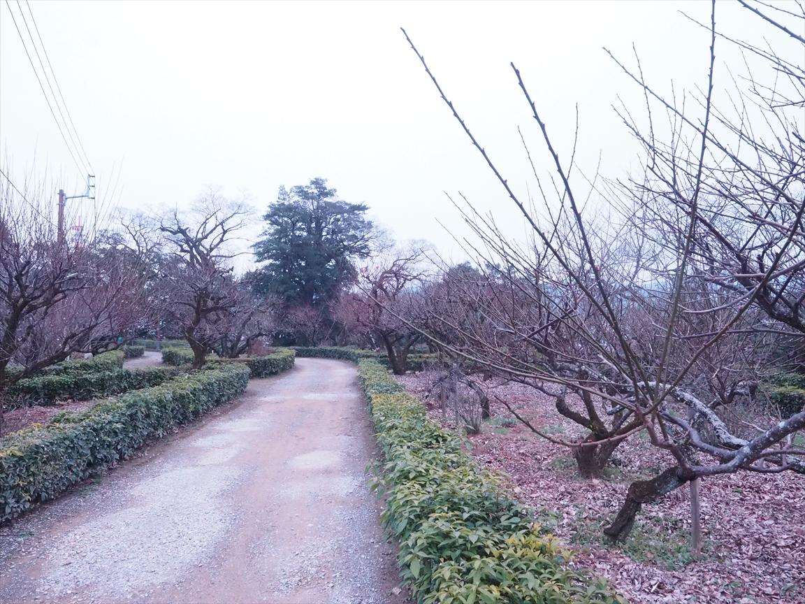 梅 梅ノ段