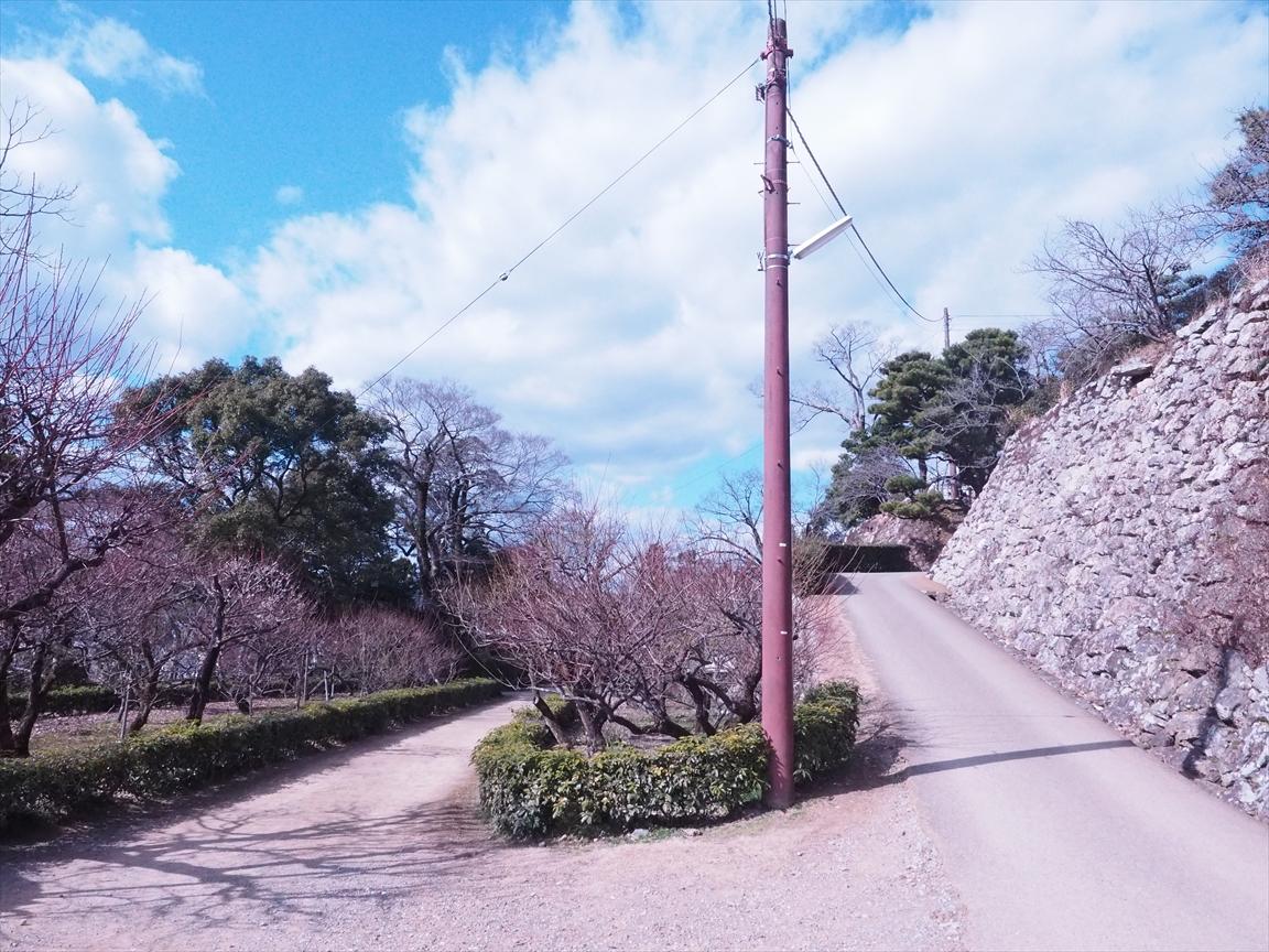 左道を進む