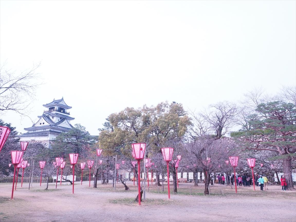 染井吉野 標本木 三ノ丸