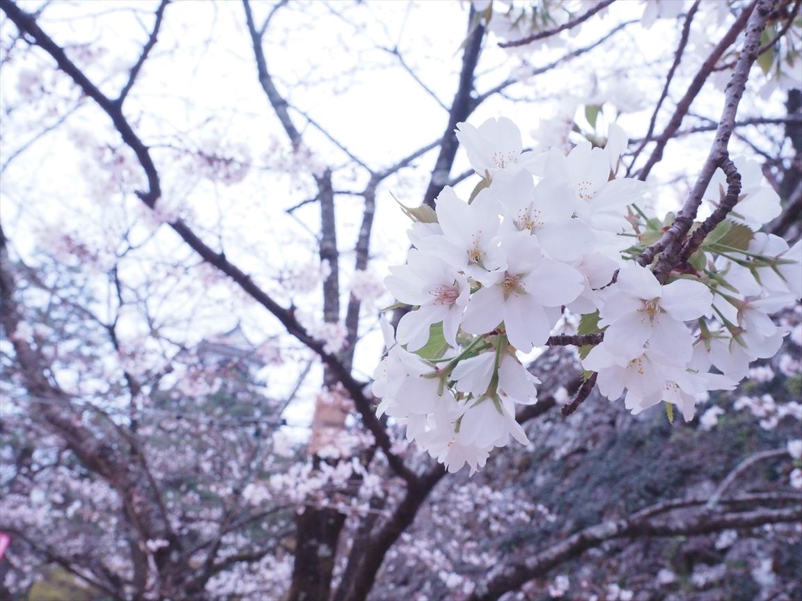 山桜 三ノ丸